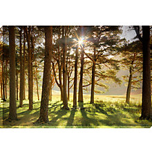 Buy Mike Shepherd- Wooded Meadow Print on Glass, 60 x 90cm Online at johnlewis.com
