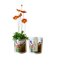 Buy British Legion Poppy Grow Kit Online at johnlewis.com