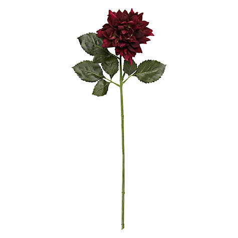 Buy Dahlia, Burgundy Online at johnlewis.com