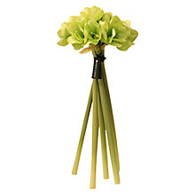 Buy Hervé Gambs Amaryllis Bouquet, Green, H68cm Online at johnlewis.com