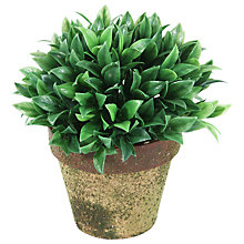 Buy Peony Fern Mini Topiary Online at johnlewis.com
