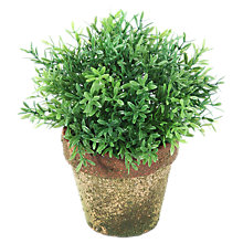 Buy Peony Rosemary Mini Topiary Online at johnlewis.com