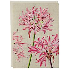 Buy Caspari Ltd Surprise Lilies Notecards, Pack of 8 Online at johnlewis.com