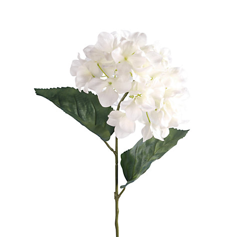 Buy Hydrangea, Cream / Green Online at johnlewis.com