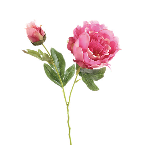 Buy Floralsilk Peony Spray Online at johnlewis.com