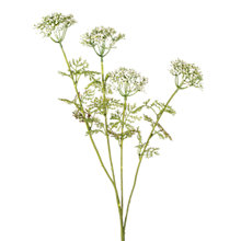 Buy Queen Anne's Lace Spray Online at johnlewis.com
