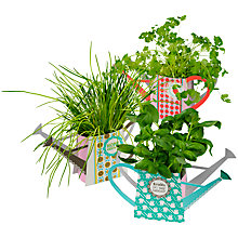 Buy Give What You Grow Herb Pots, Pack of 3 Online at johnlewis.com