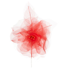 Buy John Lewis Open Flower, Dark Coral Online at johnlewis.com