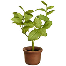 Buy John Lewis Mini Artificial Basil Herb Pot Online at johnlewis.com