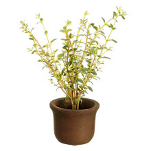 Buy John Lewis Mini Artificial Thyme Herb Pot Online at johnlewis.com