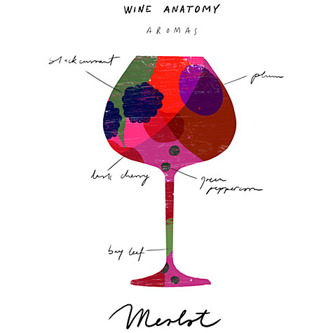 Buy House by John Lewis, Ana Petrak - Wine Anatomy: Merlot Unframed Print, 30 x 24cm Online at johnlewis.com
