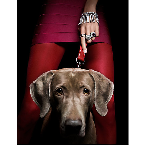 Buy House by John Lewis, Thomas Lagrange - Weimaraner Unframed Print, 30 x 24cm Online at johnlewis.com