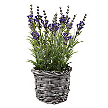 Buy Lavender In Wicker Pot, Small Online at johnlewis.com