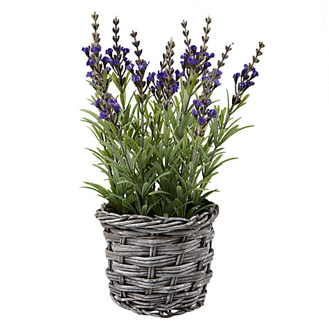 Buy Peony Lavender In Wicker Pot, Small Online at johnlewis.com