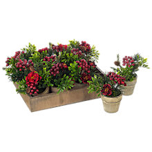 Buy Parlane Rose Berry Flower Pot, Assorted Online at johnlewis.com