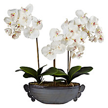 Buy 3 Stem Artificial Orchid Longboat, Black Online at johnlewis.com