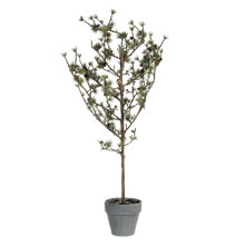 Buy Floral Silk Iced Cedar Pine Tree Online at johnlewis.com