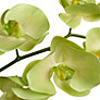 Buy Floral Silk Phalaenopsis, Green Online at johnlewis.com