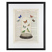 Buy Marion McConaghie - Butterfly Dome Framed Print, 54 x 44cm Online at johnlewis.com