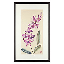 Buy Jane Dwight - Orchid Spray Framed Print, 32 x 42cm Online at johnlewis.com