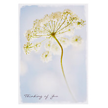 Buy Card Mix Cow Parsley Sympathy Card Online at johnlewis.com