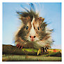Buy Paperhouse Bad Hair Day Greeting Card Online at johnlewis.com