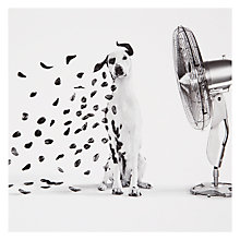 Buy Woodmansterne Dalmation in Fan Greeting Card Online at johnlewis.com