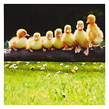 Buy Paperhouse Seven Little Ducklings Greeting Card Online at johnlewis.com
