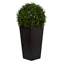 Buy Boxwood Grass Ball in Granite Planter, Small Online at johnlewis.com