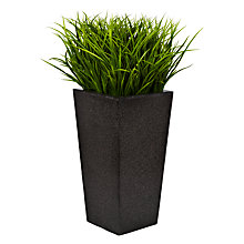 Buy Boxwood Grass Bush in Granite Planter Online at johnlewis.com