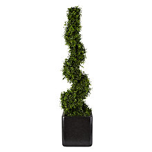Buy Boxwood Spiral Hedge in Granite Cube Online at johnlewis.com