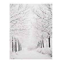 Buy John Lewis Battery-Operated Tree Avenue Canvas Online at johnlewis.com