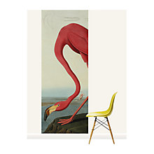 Buy Surface View Greater Flamingo Wall Mural, 100 x 265cm Online at johnlewis.com