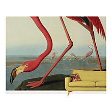 Buy Surface View Greater Flamingo Wall Mural, 360 x 265cm Online at johnlewis.com