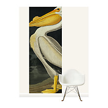 Buy Surface View American White Pelican Wall Mural, 100 x 265cm Online at johnlewis.com