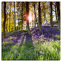 Buy Mike Shepherd - Bluebell Morning Print on Glass, 48 x 48cm Online at johnlewis.com