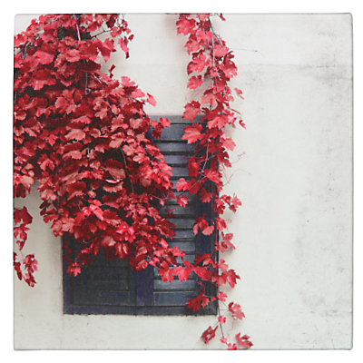 Pacific Lifestyle Red Ivy Outdoor Canvas, 40 x 40cm