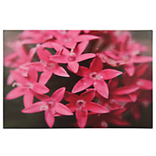 Buy Pacific Lifestyle Pink Star Flower Outdoor Canvas, 60 x 90cm Online at johnlewis.com