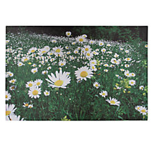 Buy Pacific Lifestyle Daisy Fields Outdoor Canvas, 60 x 90cm Online at johnlewis.com