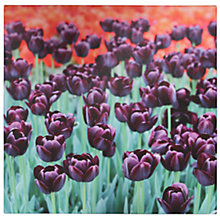Buy Pacific Lifestyle Purple Tulips Outdoor Canvas, 70 x 70cm Online at johnlewis.com