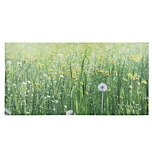 Buy Pacific Lifestyle - Dandelion Field Outdoor Canvas, 60 x 120cm Online at johnlewis.com
