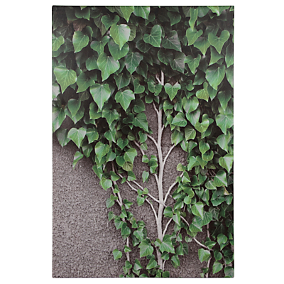 Pacific Lifestyle Ivy Vines and Leaves Outdoor Canvas, 90 x 60cm
