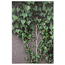 Buy Pacific Lifestyle Ivy Vines and Leaves Outdoor Canvas, 90 x 60cm Online at johnlewis.com
