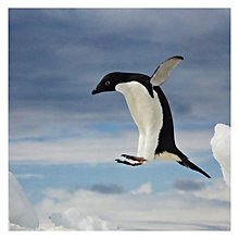 Buy Paperhouse Leaping Penguin Christmas Card Online at johnlewis.com