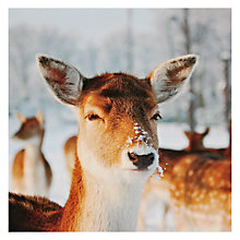 Buy Paperhouse Deer Christmas Card Online at johnlewis.com