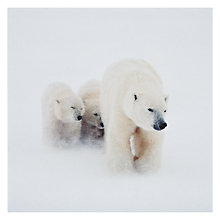 Buy Paperhouse Polar Bear Mother And Cubs Christmas Card Online at johnlewis.com