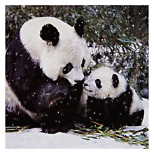 Buy Woodmansterne Panda With Baby Christmas Card Online at johnlewis.com