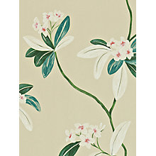 Buy Sanderson Oleander Wallpaper Online at johnlewis.com
