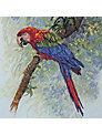 Anchor Parrot Cross Stitch Kit