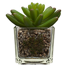 Buy House by John Lewis Artificial Mini Echeveria, H11cm Online at johnlewis.com